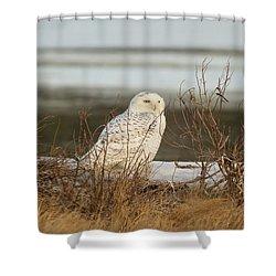 Snowy Owl On Cape Cod Shower Curtain