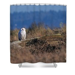 Shower Curtain featuring the photograph Snowy Owl On Log by Sharon Talson