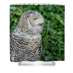 Snowy Owl Shower Curtain