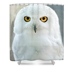 Snowy Owl Portrait Shower Curtain