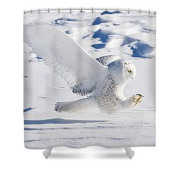 Shower Curtain featuring the photograph Snowy Owl Pouncing by Rikk Flohr