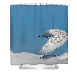 Snowy Owl - Taking Flighty Shower Curtain