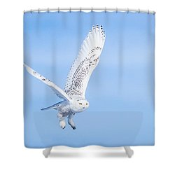 Shower Curtain featuring the photograph Snowy Owls Soaring by Rikk Flohr
