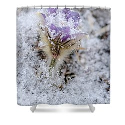 Snowy Pasqueflower Morning Shower Curtain