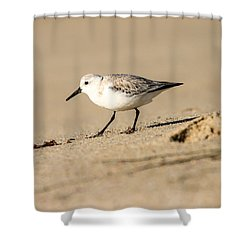 Sanderling Shower Curtain