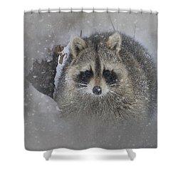 Snowy Raccoon Shower Curtain