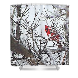 Snowy Red Bird A Cardinal In Winter Shower Curtain