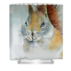 Snowy Red Squirrel Shower Curtain