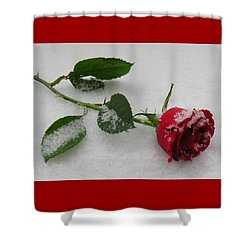 Richard's  Rose Shower Curtain