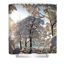 Snowy Trees Shower Curtain