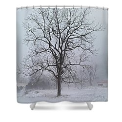 Snowy Walnut Shower Curtain by Denise Romano