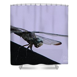 So Many Bugs So Little Time Shower Curtain