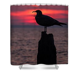 So Tired Seagull Seaside Park Nj Shower Curtain