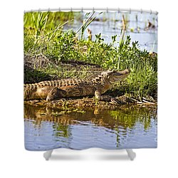 Soaking In The Sun Shower Curtain by Scott Pellegrin