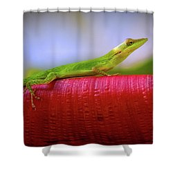 Soaking Up The Sun Shower Curtain by Doug Sturgess