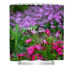 Shower Curtain featuring the photograph Soapwort And Pinks by Kathryn Meyer