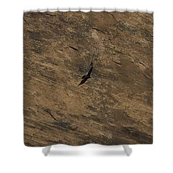 Shower Curtain featuring the photograph Soaring by Anne Rodkin