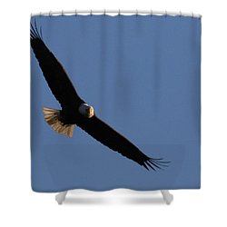 Soaring Eagle Shower Curtain by Brook Burling