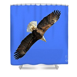 Soaring Into The Blue  Shower Curtain