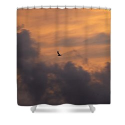 Shower Curtain featuring the photograph Soaring Into The Sunset by Richard Bryce and Family