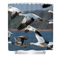 Soaring On The Wing Shower Curtain
