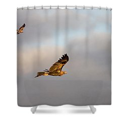Soaring Pair Shower Curtain by Mike  Dawson