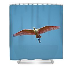 Soaring Roseate Spoonbill Shower Curtain