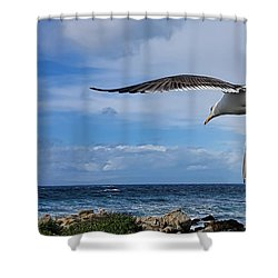 Shower Curtain featuring the photograph Soaring Seagull  by Gina Savage