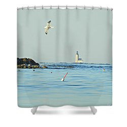 Soaring Seagull Shower Curtain