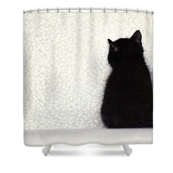 Shower Curtain featuring the photograph Sitting Kitty by Amy Tyler