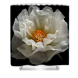 Shower Curtain featuring the photograph Soft And Pure by Judy Vincent
