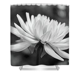 Soft Details Black And White Shower Curtain