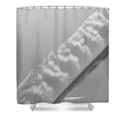 Soft Feather Shower Curtain by Tim Good