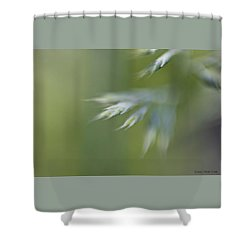 Soft Green Shower Curtain