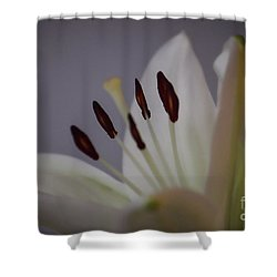 Soft Lily Shower Curtain by Roberta Byram