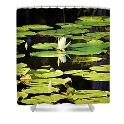 Shower Curtain featuring the photograph Soft Morning Light by Jan Amiss Photography