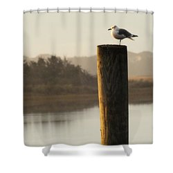 Soft Mornings Shower Curtain by Karen Wiles