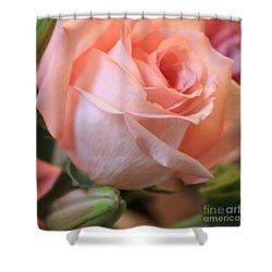 Soft Pink Rose Shower Curtain by Carol Groenen