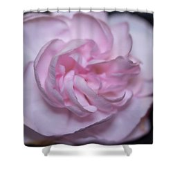 Soft Pink Rose Shower Curtain
