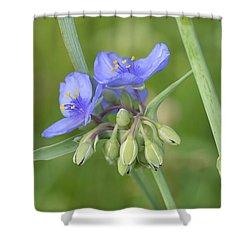 Soft Purple Spider Shower Curtain