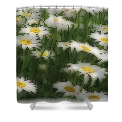 Shower Curtain featuring the photograph Soft Touch Daisy by Debra     Vatalaro