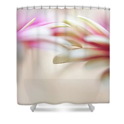 Shower Curtain featuring the photograph Soft Touch. Macro Gerbera by Jenny Rainbow