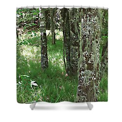 Shower Curtain featuring the photograph Soft Trees by Shari Jardina
