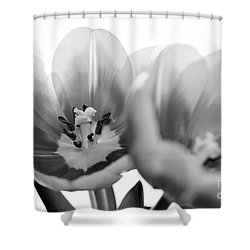 Soft Whispers Shower Curtain by Afrodita Ellerman