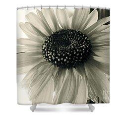 Soft White Light Shower Curtain by Trish Hale