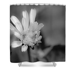 Shower Curtain featuring the photograph Soft White Petals by Alana Ranney