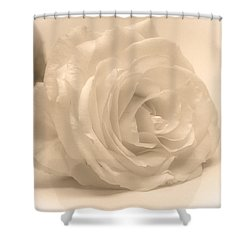 Shower Curtain featuring the photograph Soft White Rose by Scott Carruthers