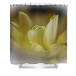 Shower Curtain featuring the photograph Soft Yellow by Yumi Johnson
