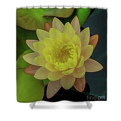 Softly Pink And Yellow Lilly Shower Curtain
