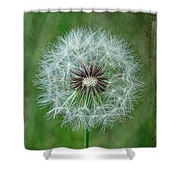 Shower Curtain featuring the photograph Softly Sitting by Jan Amiss Photography